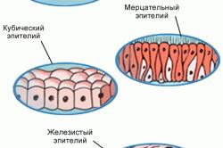 Виды эпителия