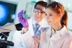 Метод Вестерн-блот для диагностики боррелиоза