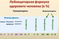 Лейкоцитарная формула здорового человека