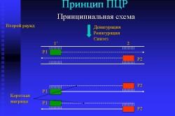 Принцип ПЦР при анализе на вирус Эпштейна-Барра