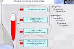 Структура ОАК