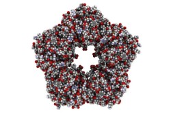 Структура молекулы С-реактивного белка