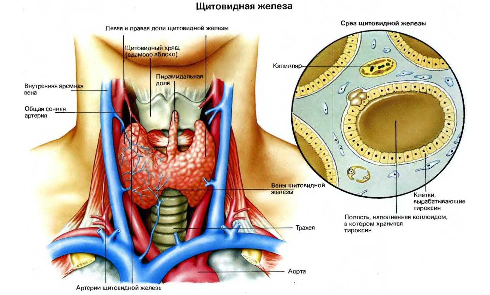 кишечные паразиты у человека симптомы