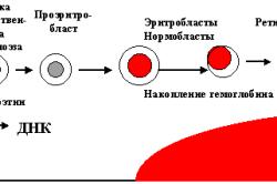 Физиология эритроцитов