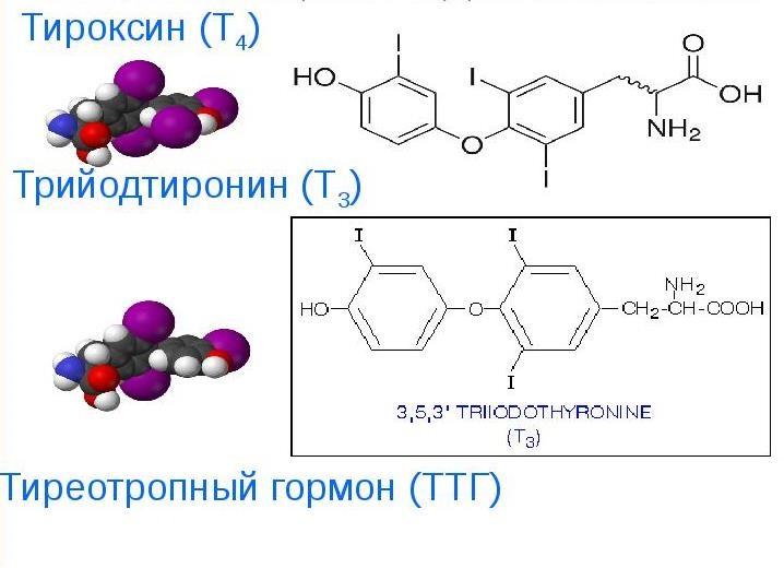 гормоны щитовидной железы препараты