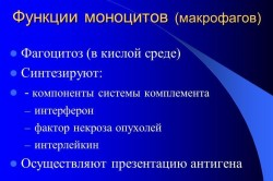 Функции моноцитов