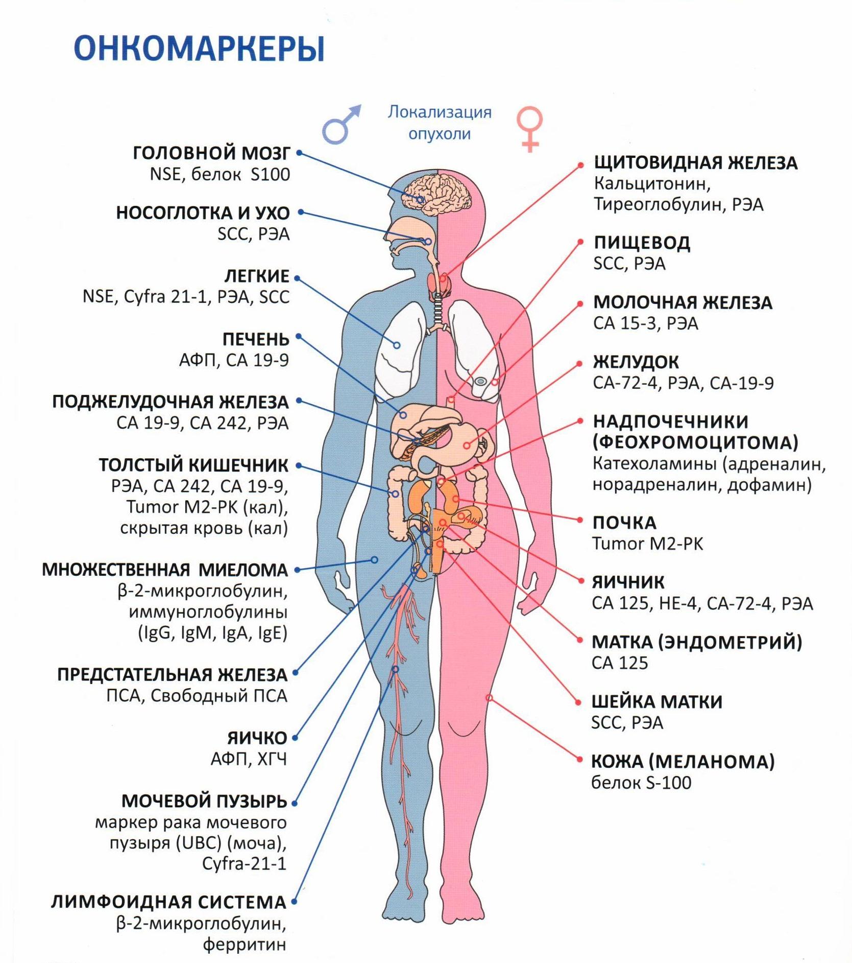 как диагностировать наличие паразитов в организме человека