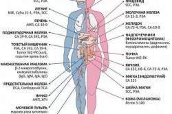 Классификация онкомаркеров