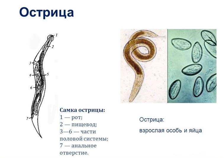 как лечится от паразитов народными средствами