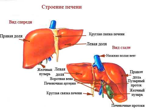 Через сколько можно узнать о заражении гепатитом в