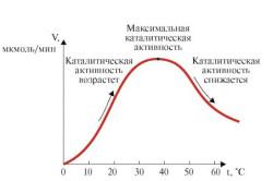 Зависимость скорости ферментативной реакции от температуры