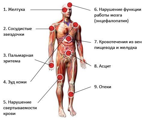 Анализ крови на HBsAg: что это, норма, расшифровка